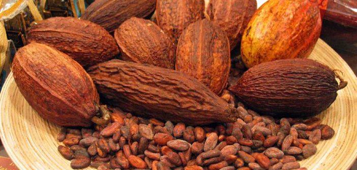 Boabele de cacao – proprietăți și beneficii