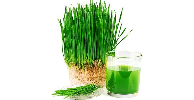 8 Beneficii ale consumului de suc din iarbă de grâu